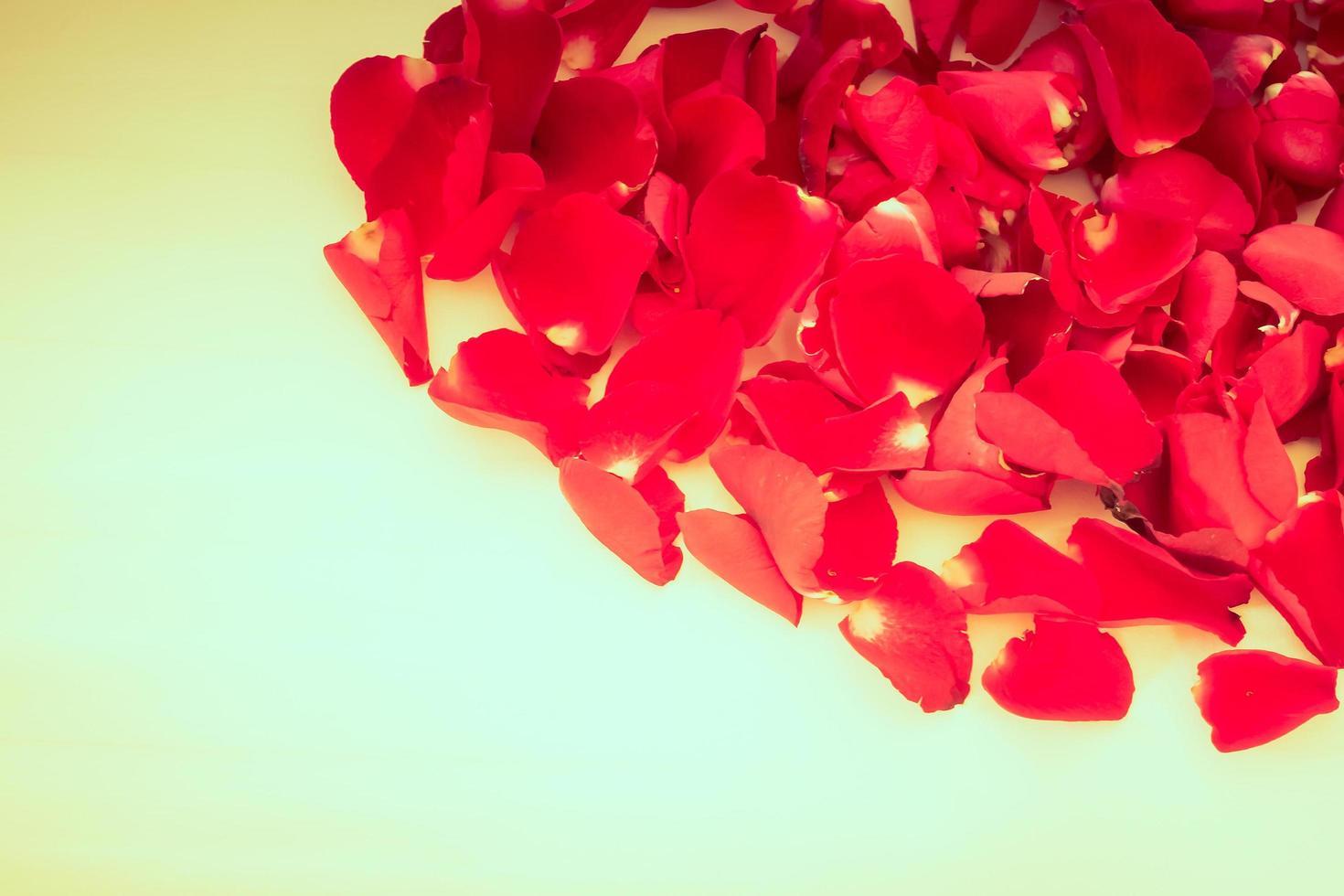 pétalos de rosa con copyspace para texto foto