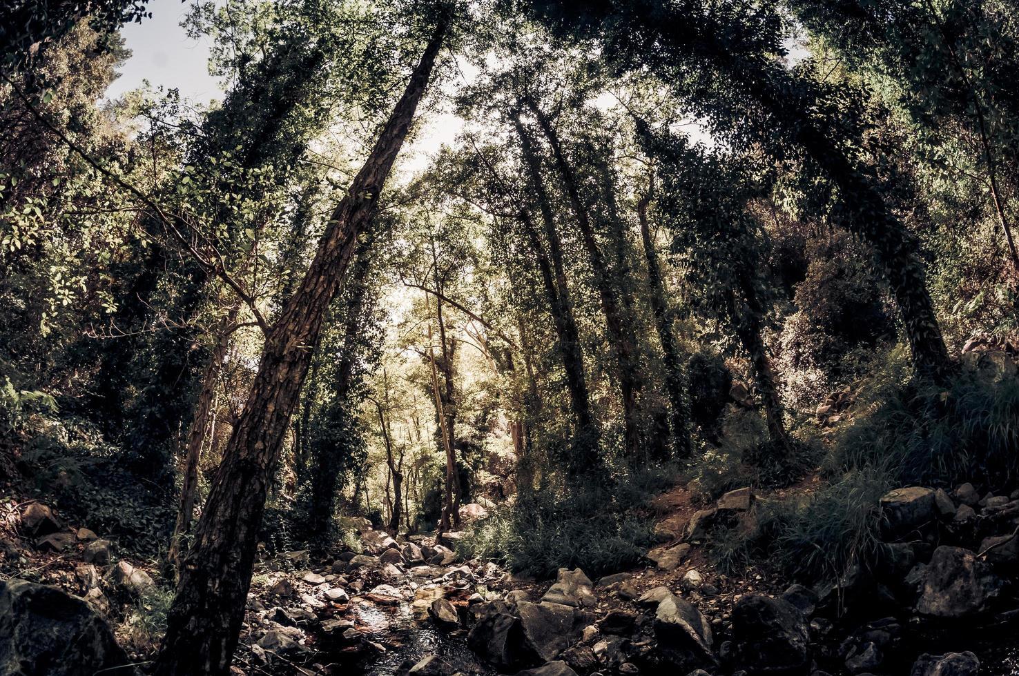 arroyo en un bosque foto