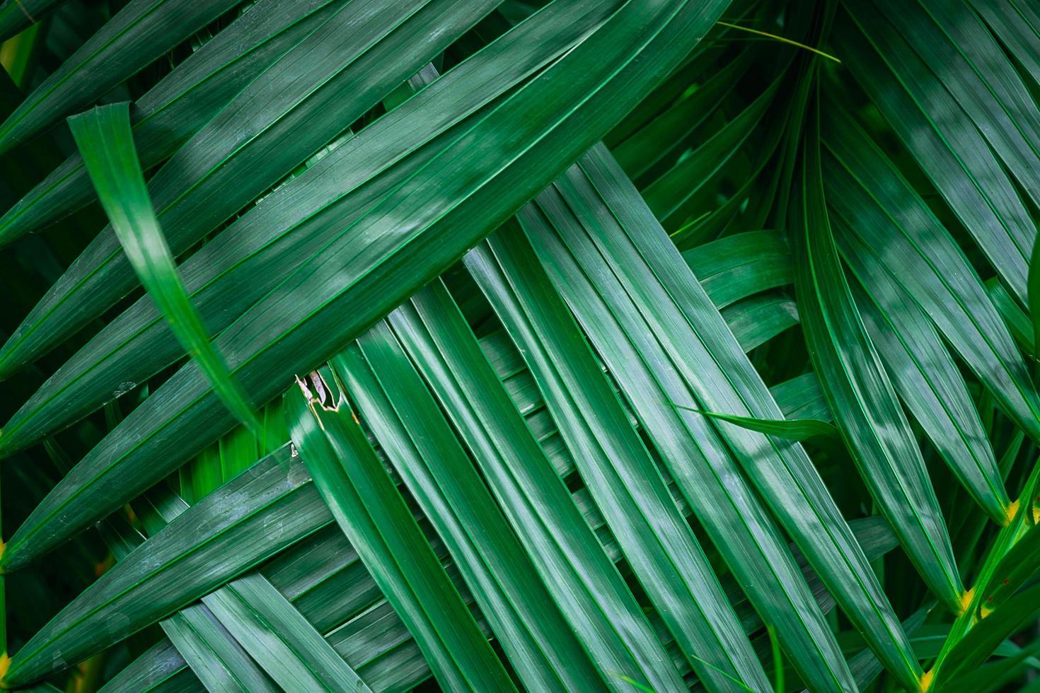 primer plano, de, verde, hojas de palma foto
