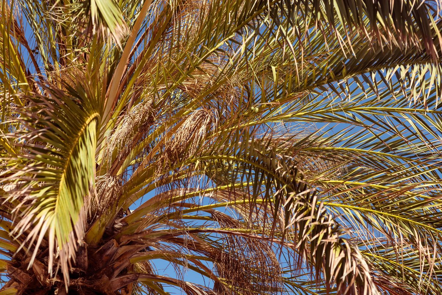 Vista cercana hacia arriba de palmera tropical foto