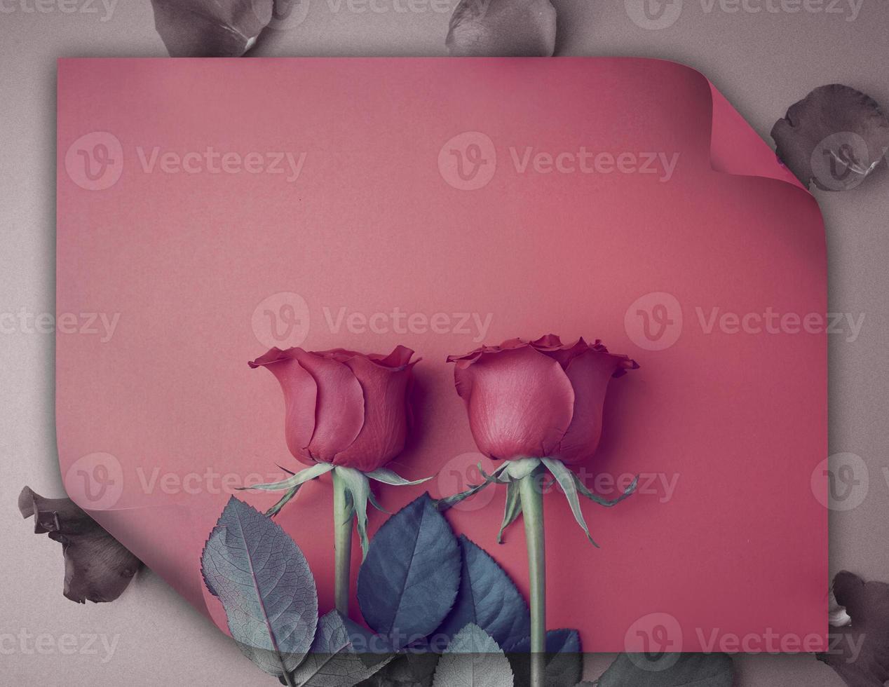 rosas para el dia de san valentin foto