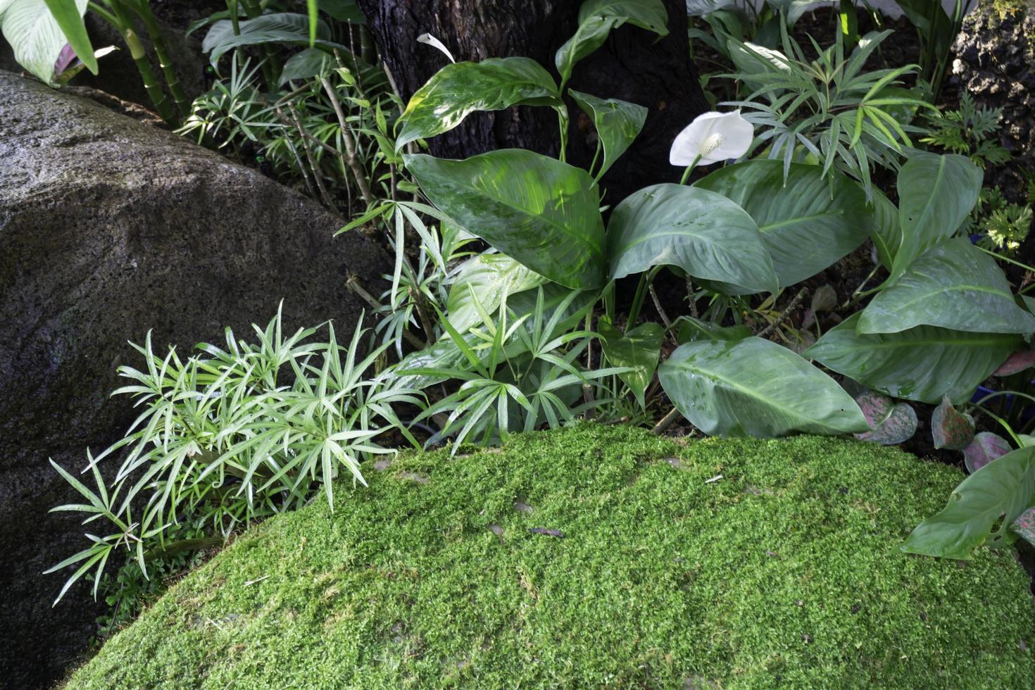 plantas ornamentales en el jardín. foto