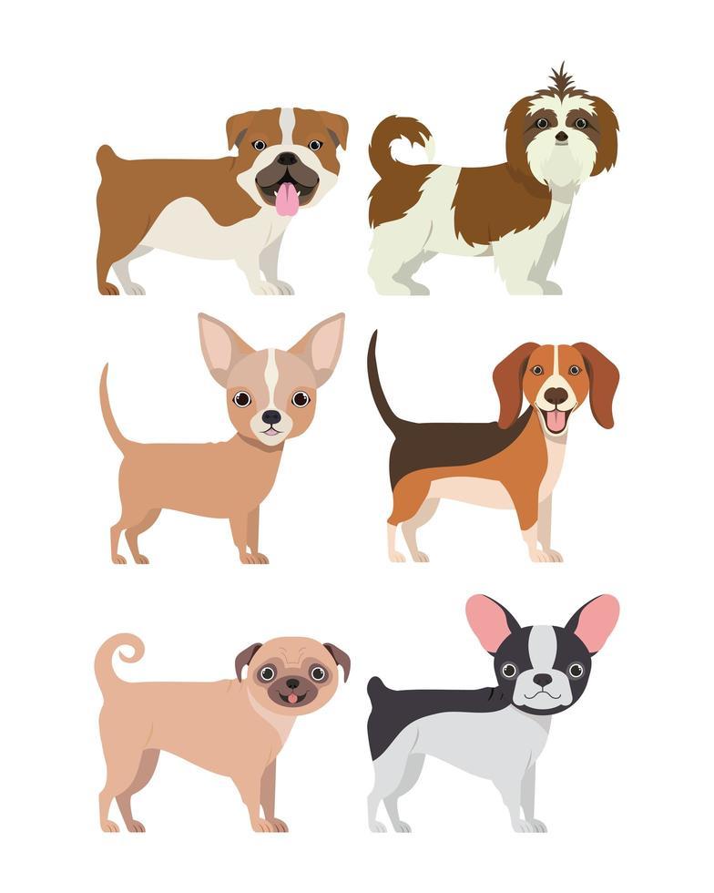 paquete de grupo de razas de perros vector
