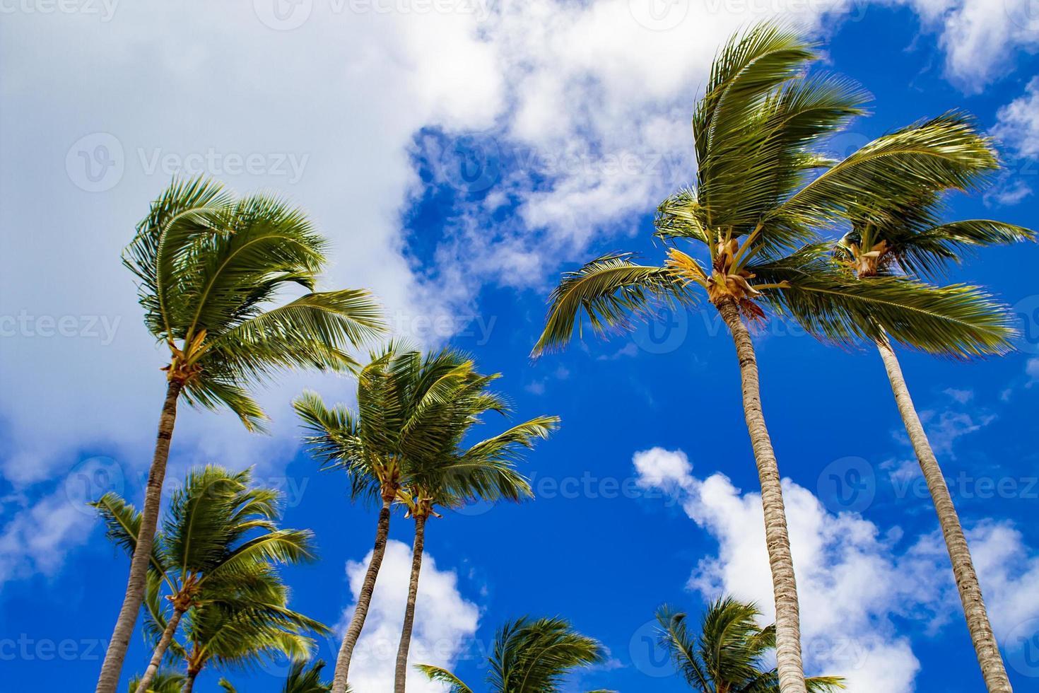 fuertes vientos mecen palmeras foto