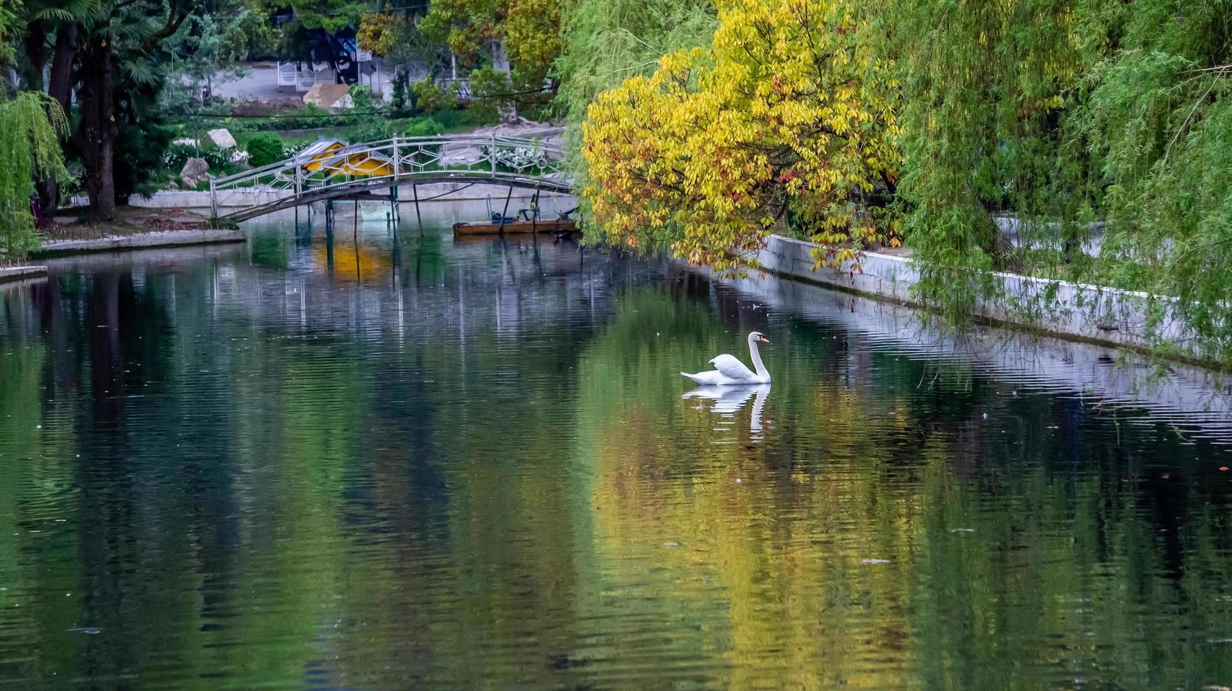 Paisaje con cisnes en un lago próximo en un parque arbolado en New Athos, Abjasia, Georgia foto