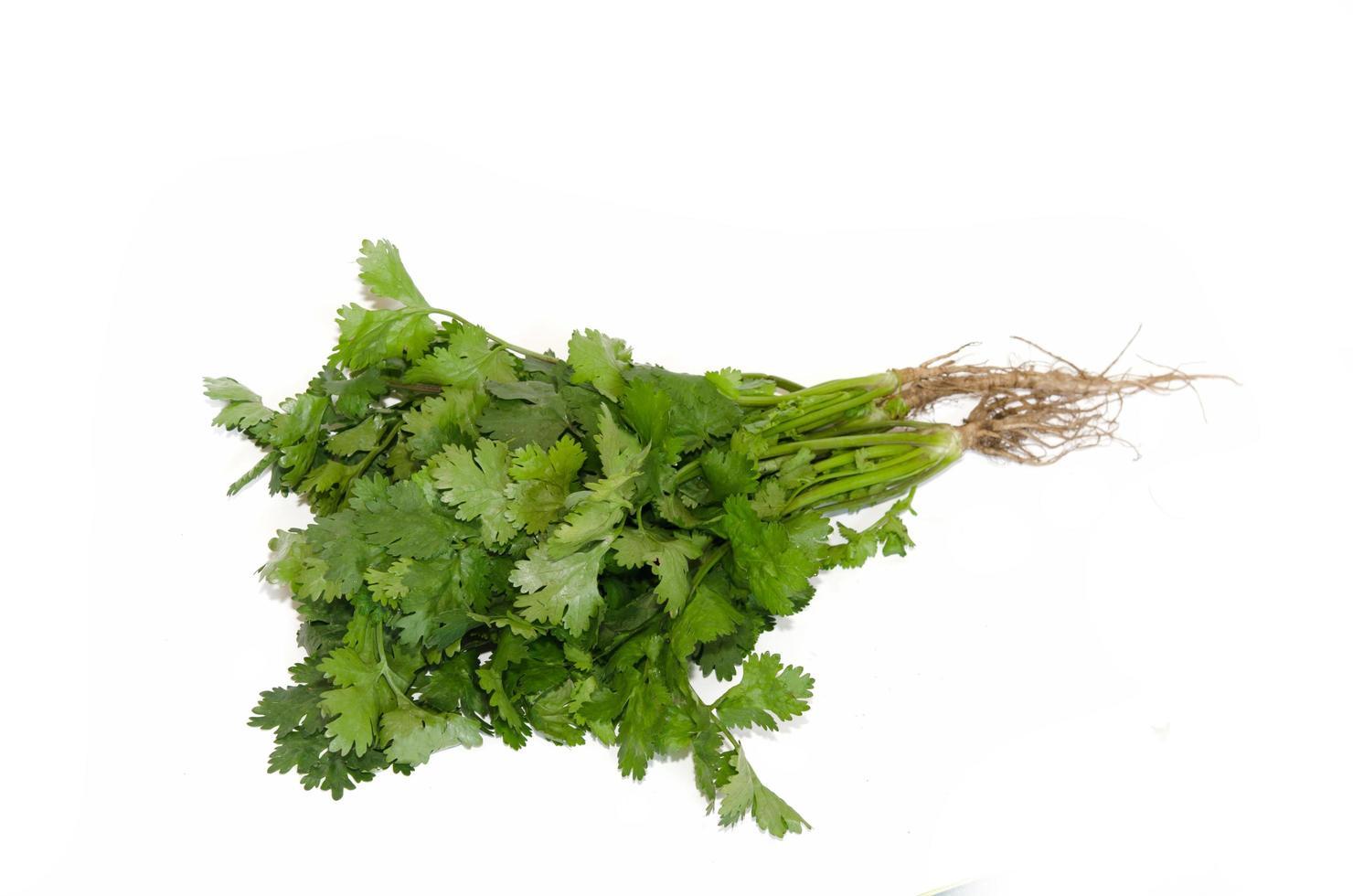 cilantro aislado en blanco foto