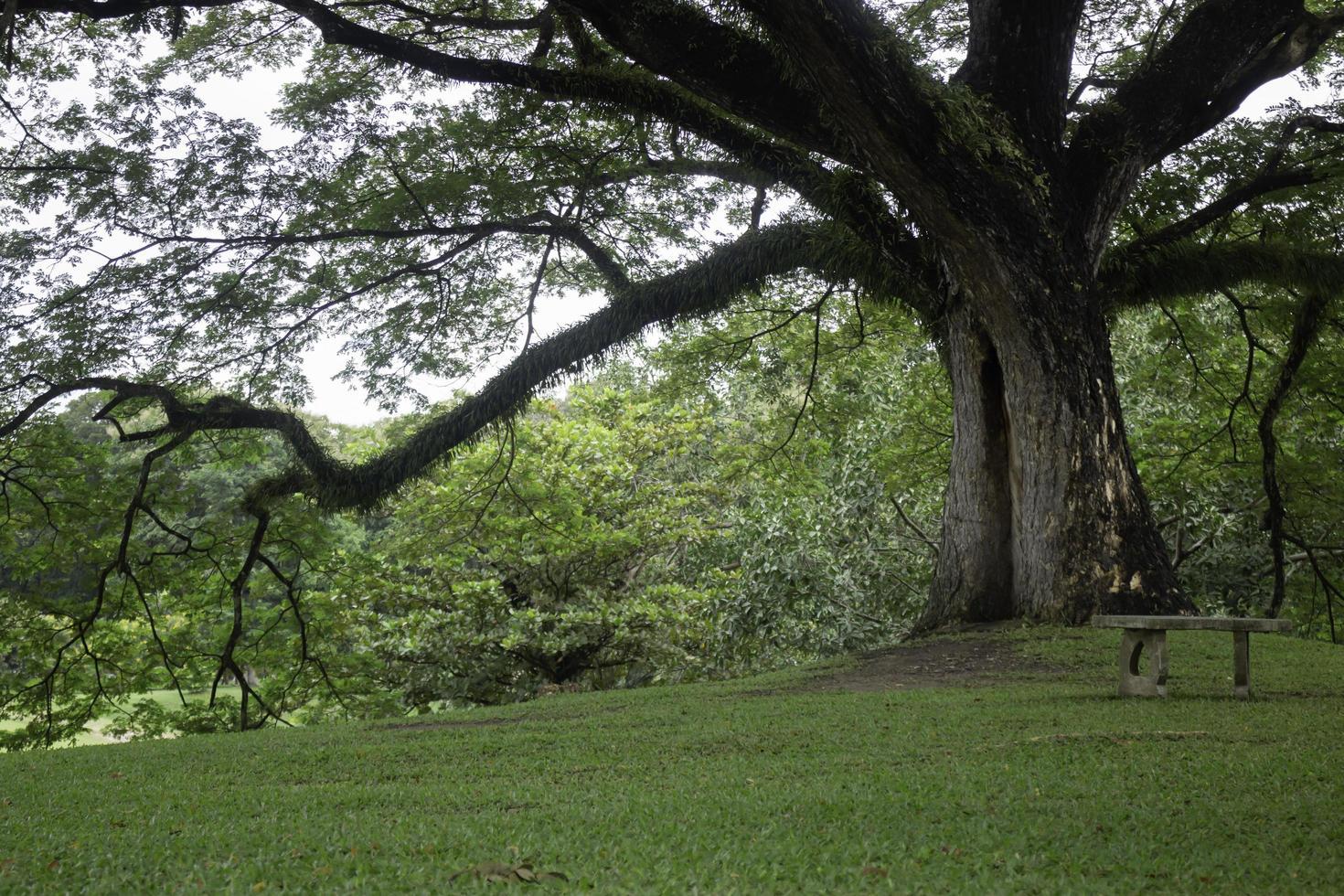 árbol verde en el campo de verano foto