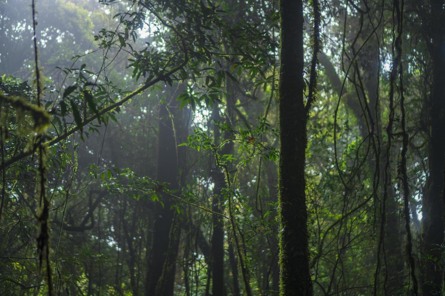 frondosos árboles en un bosque foto