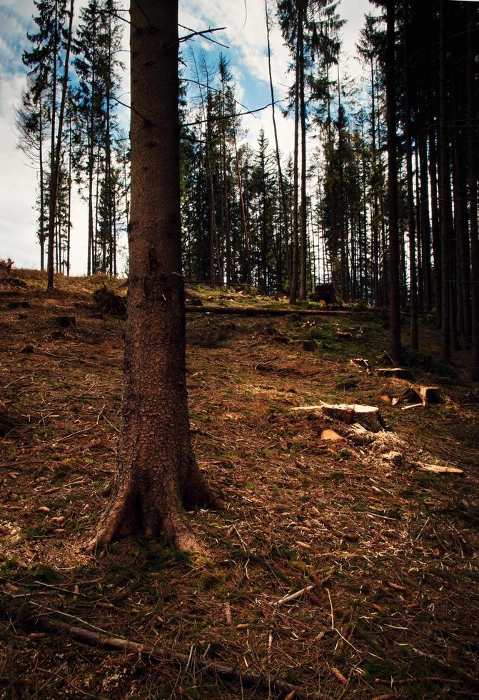 árboles en un bosque foto