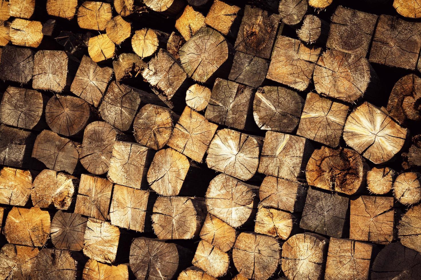 Wood log texture photo