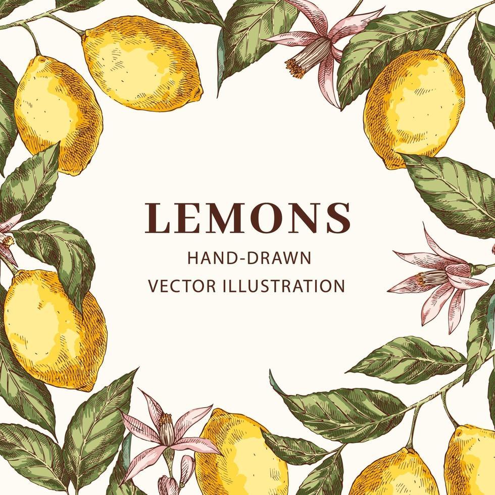 Vintage frame with lemons vector