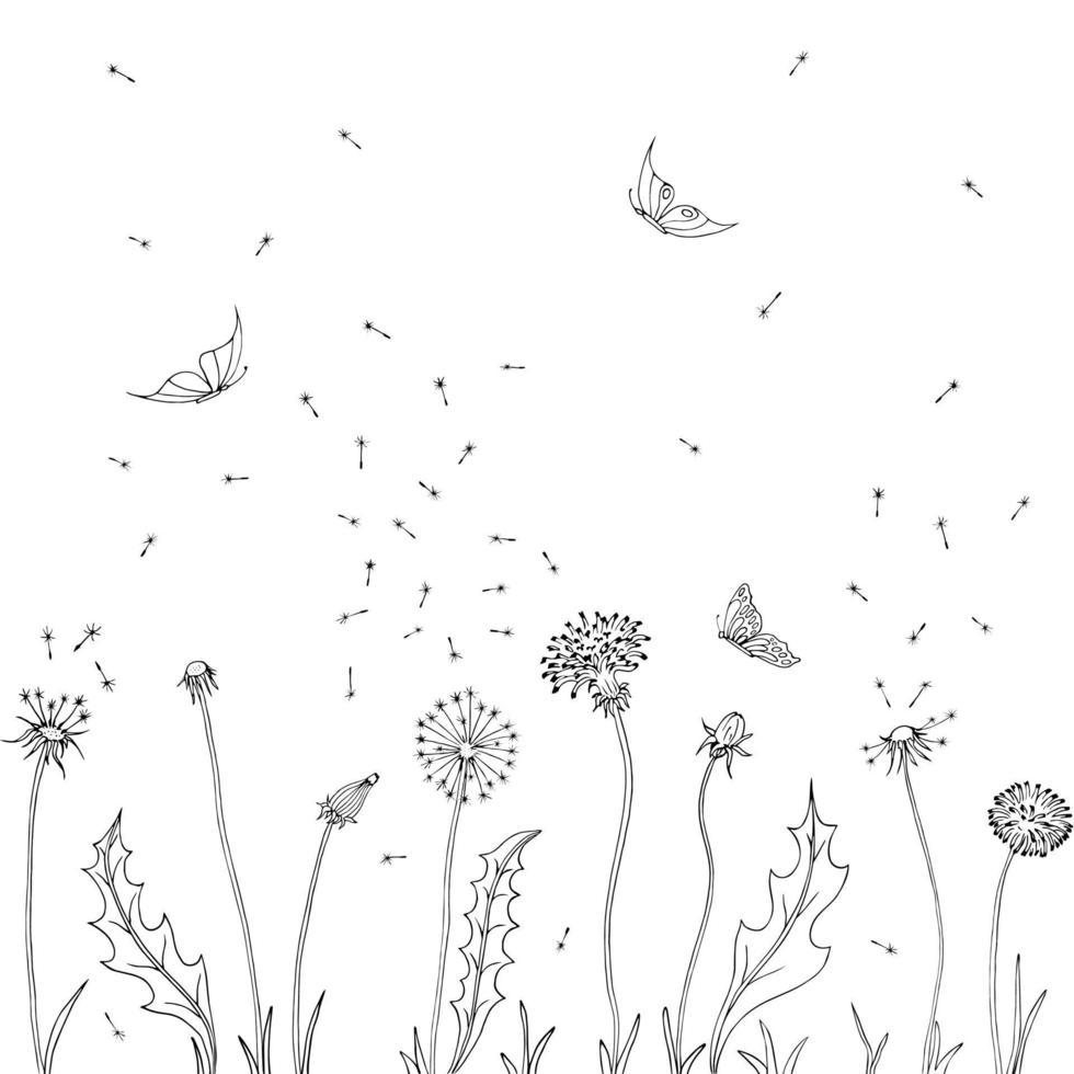 dientes de león. volar semillas de diente de león. ilustración vectorial de un boceto. fondo de verano con flores y mariposas. vector