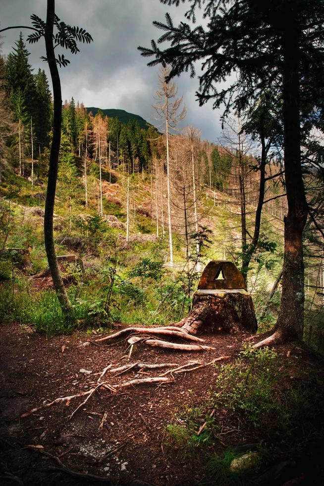 Forest with stump photo