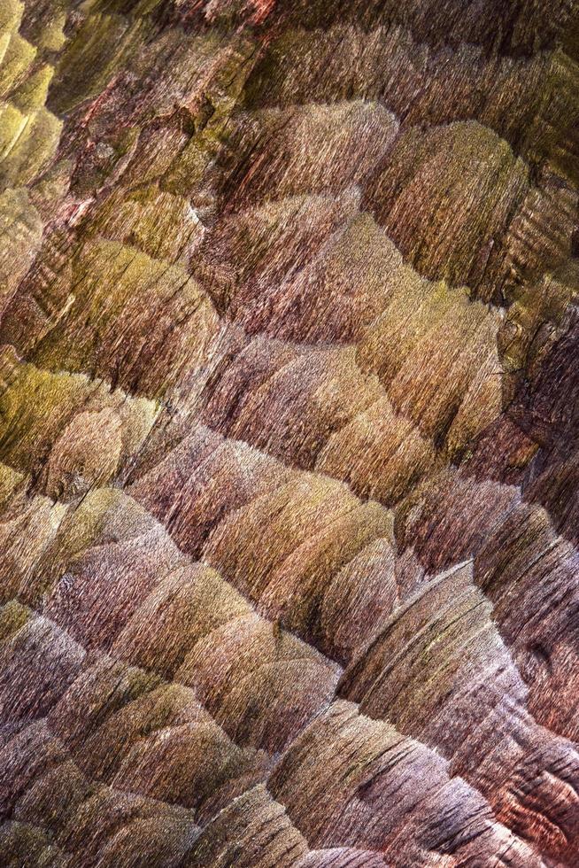 textura de madera cincelada foto