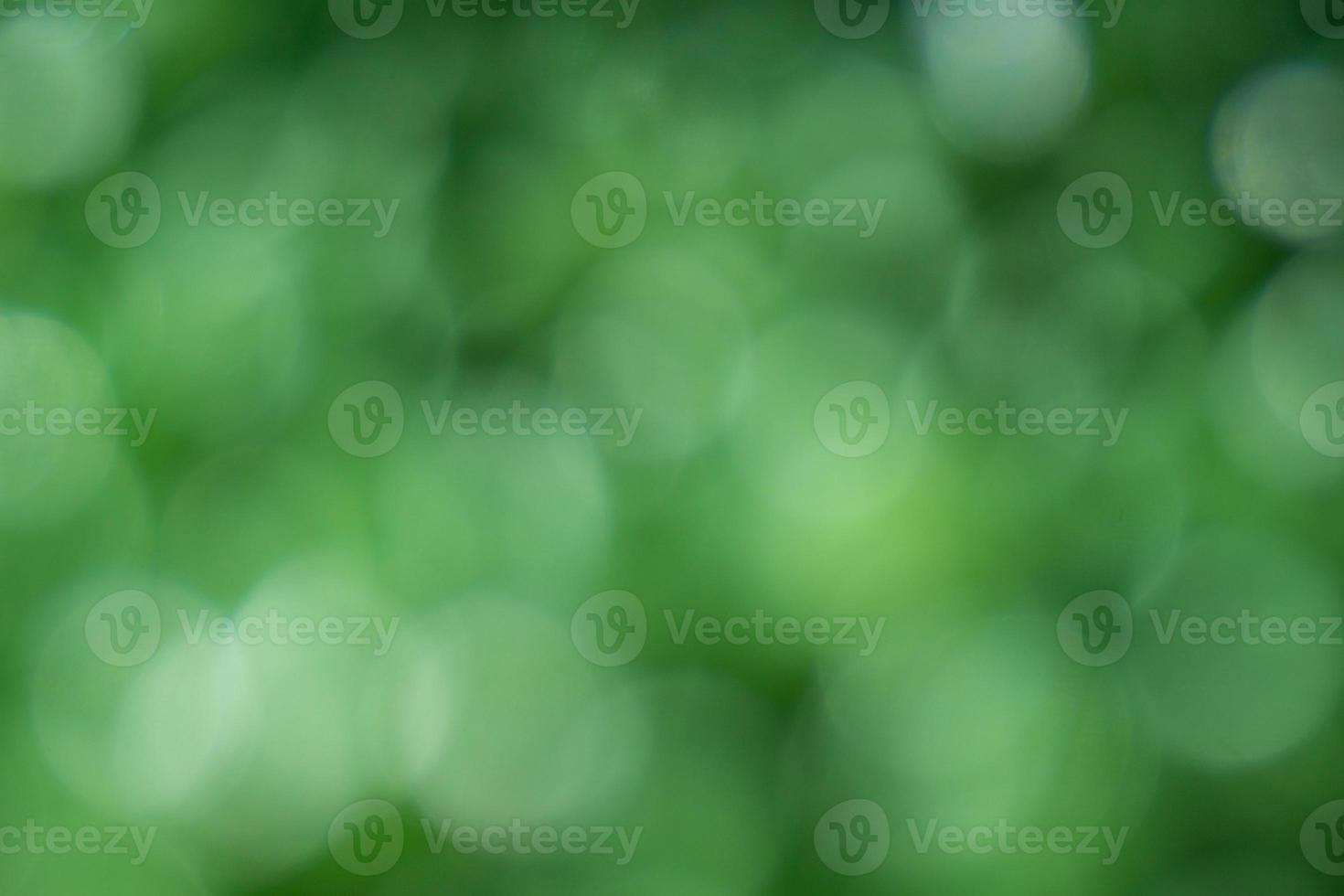 hermoso fondo verde bokeh foto