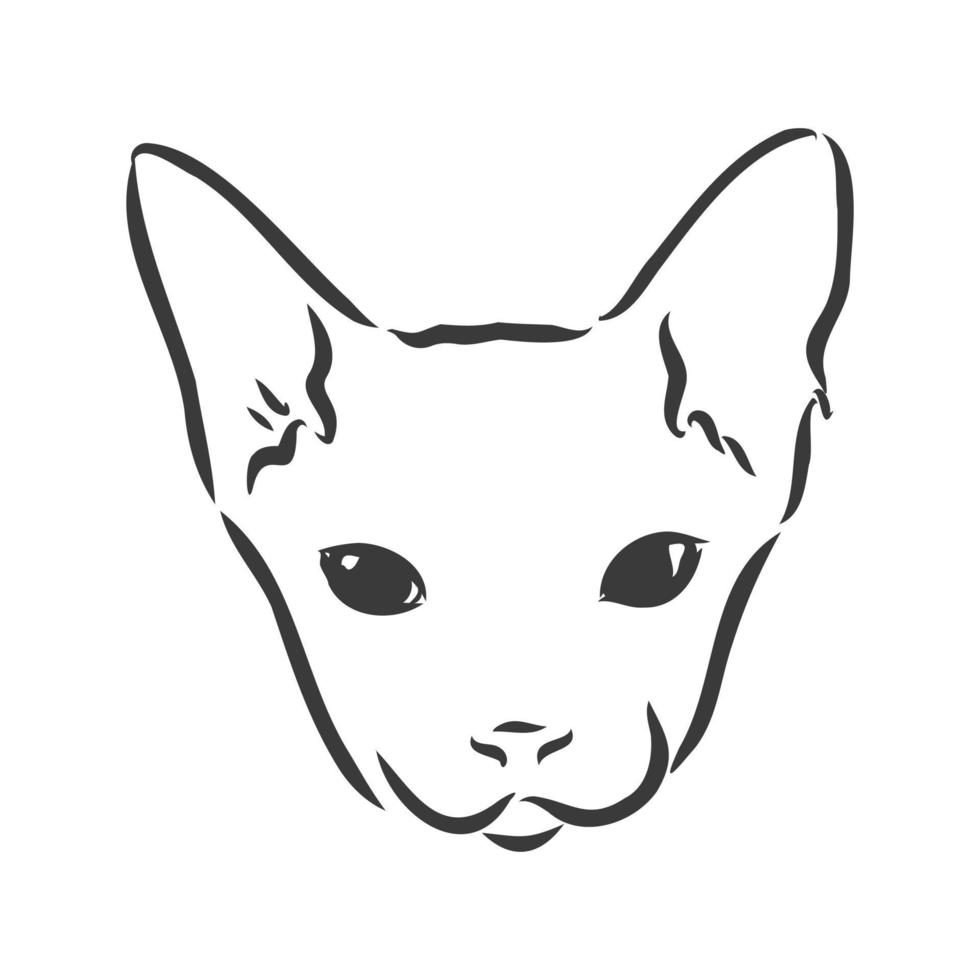 Vector illustration of a sphynx cat with a liner isolated on a white background. For printing on clothes, paper, logo, icon, blank for designers T-shirts, dishes, bed