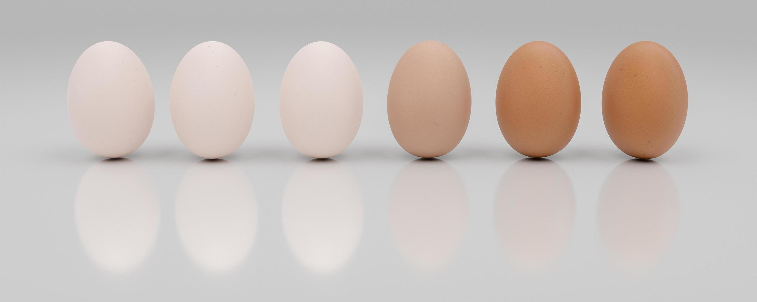 3D row of a dozen eggs sorted from light to dark photo