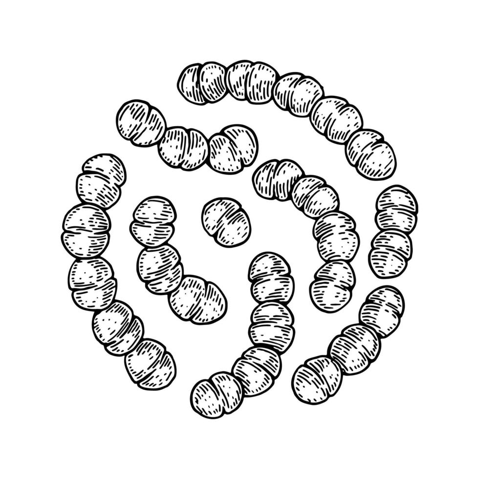 Dibujado a mano bacterias termófilas estreptococos probióticos. Buen microorganismo para la regulación de la salud y la digestión humana. ilustración vectorial en estilo boceto vector