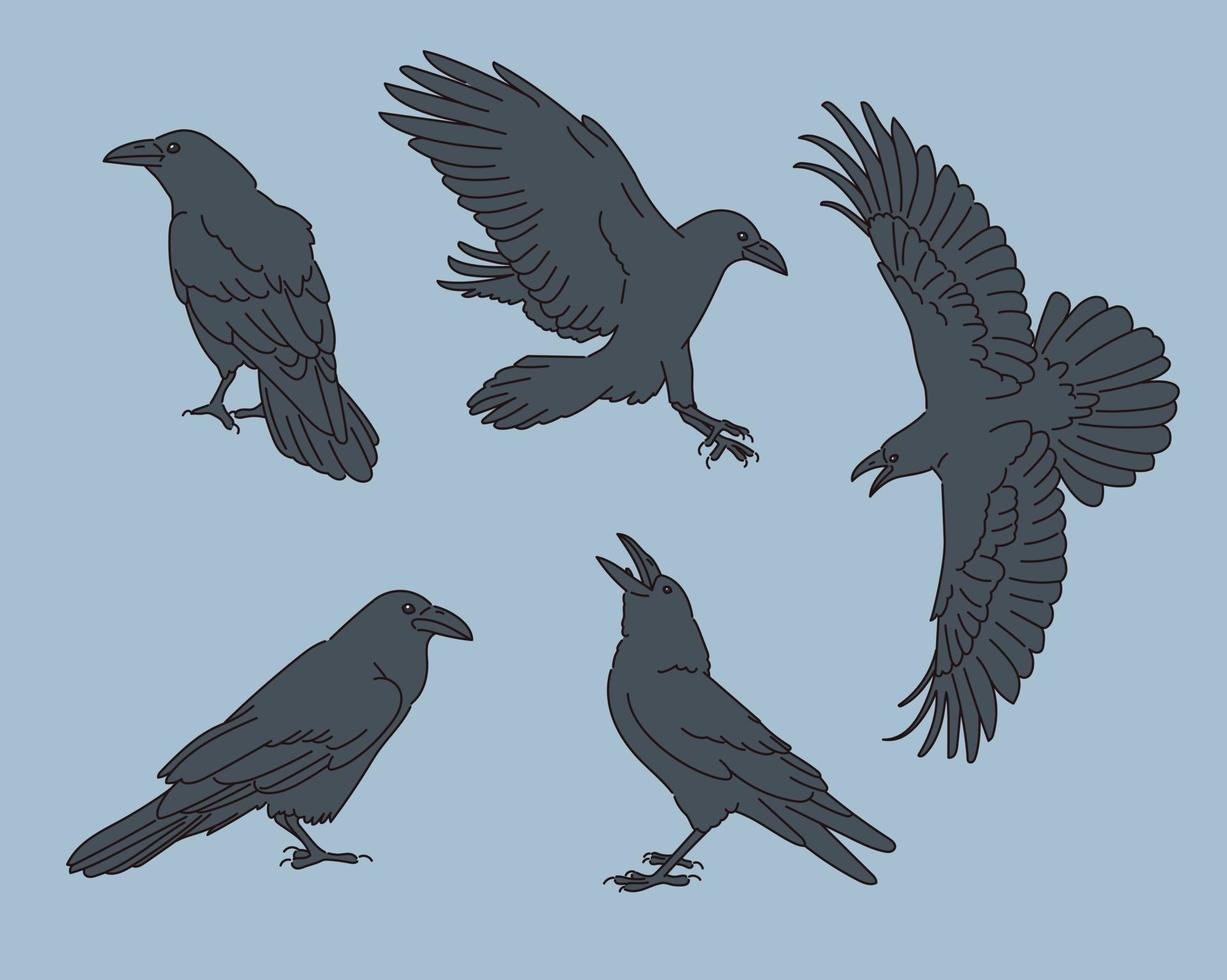 Various poses of the crow illustration vector