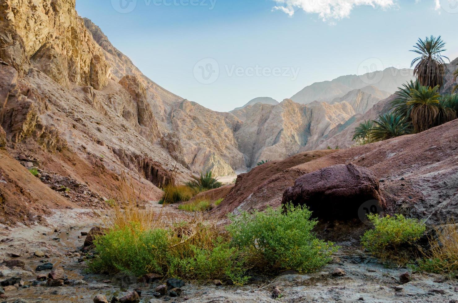 arbustos con alta montaña foto