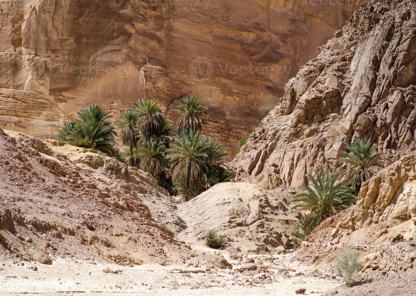 palmeras y rocas foto