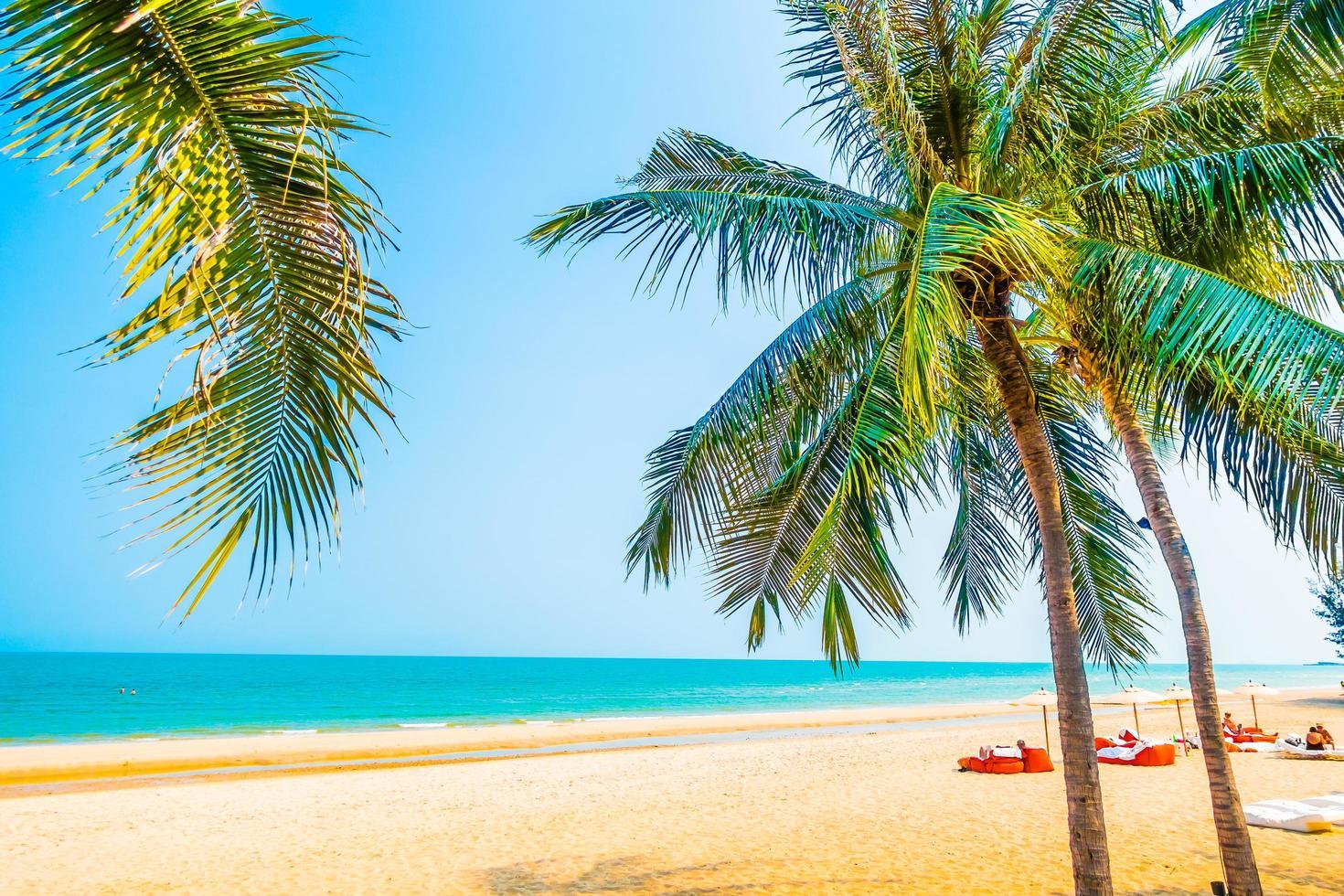 hermosa palmera en la playa foto