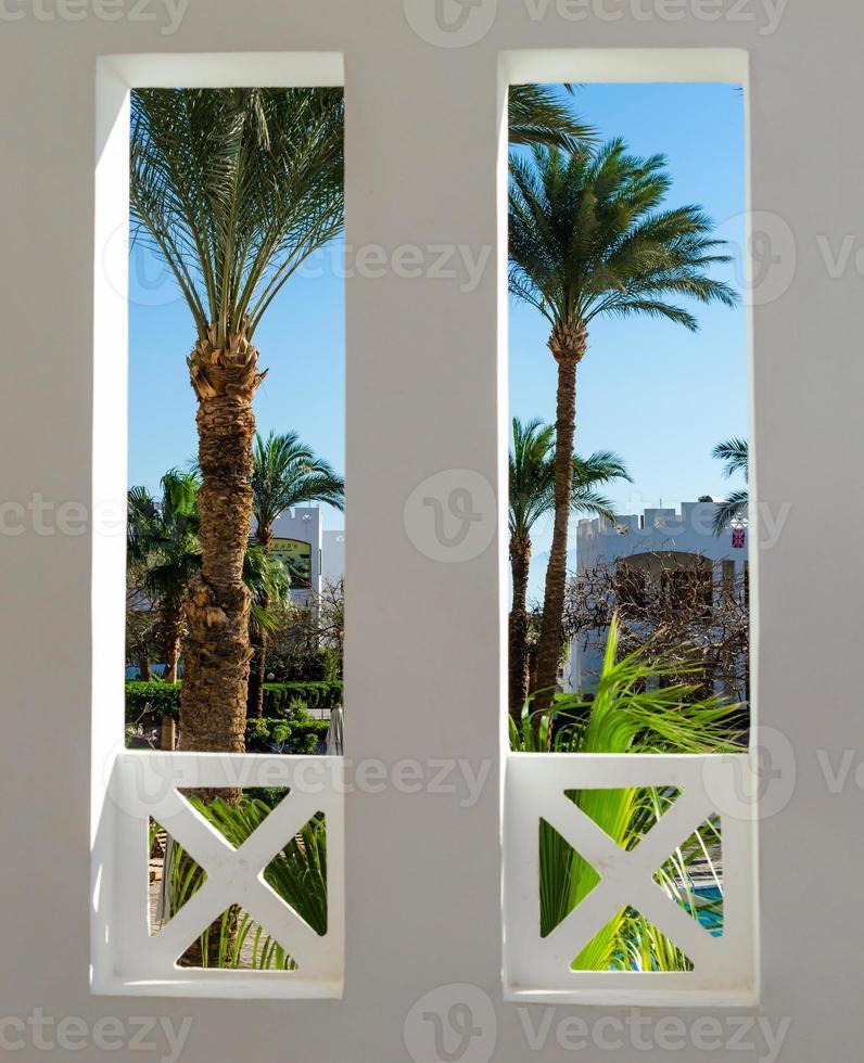 vista de palmeras desde una ventana foto