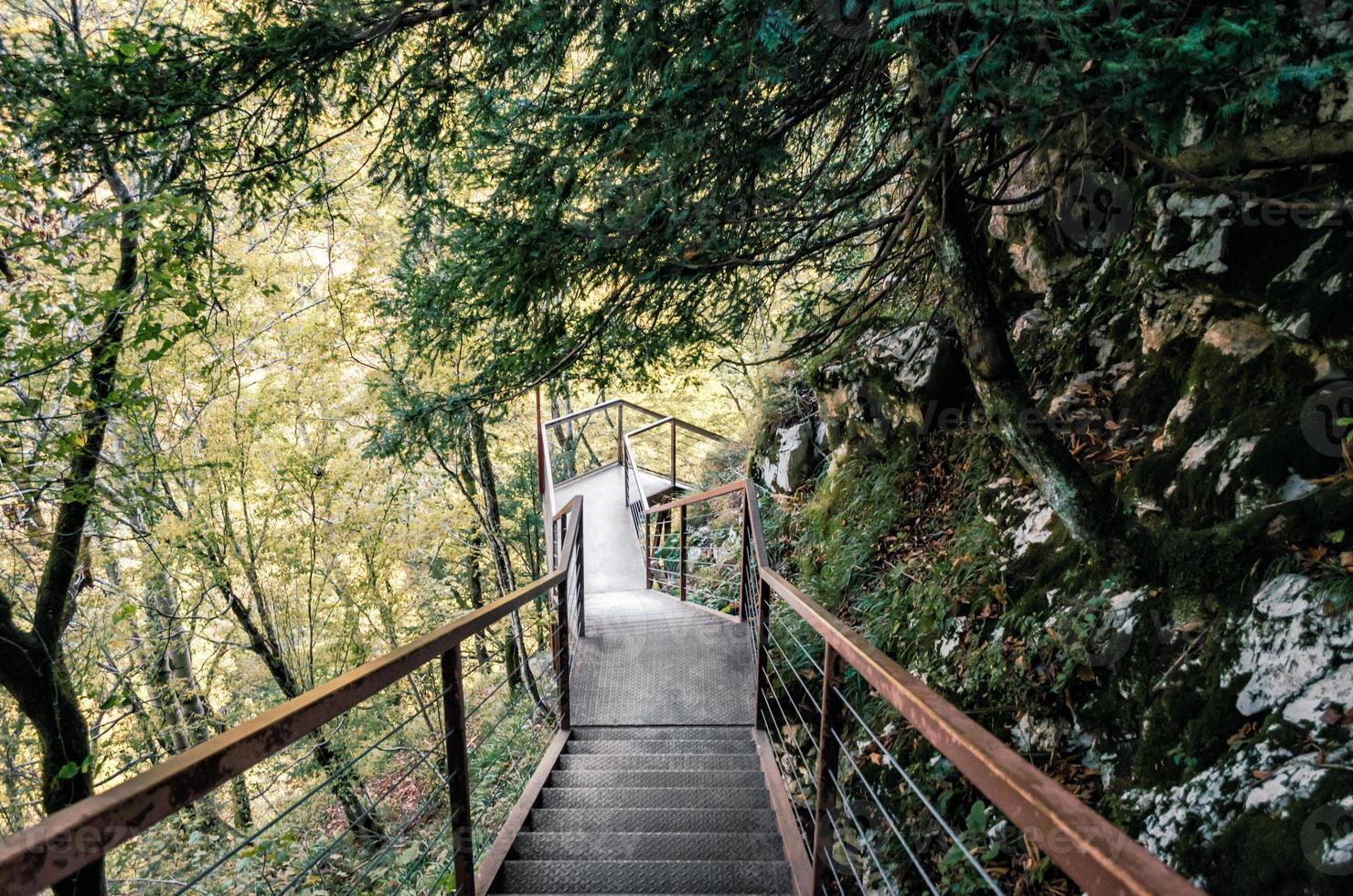 escaleras de metal en un bosque foto