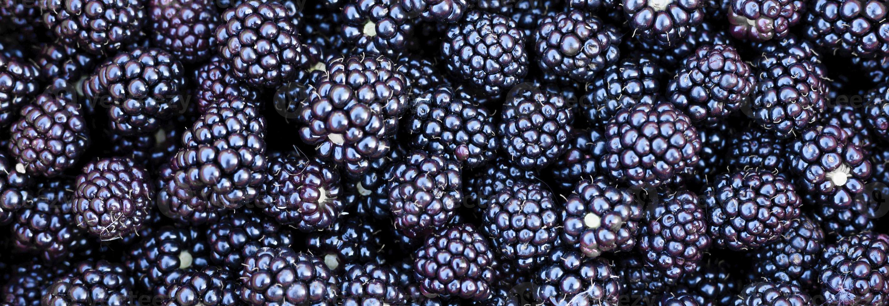 Ripe wild blackberries background photo