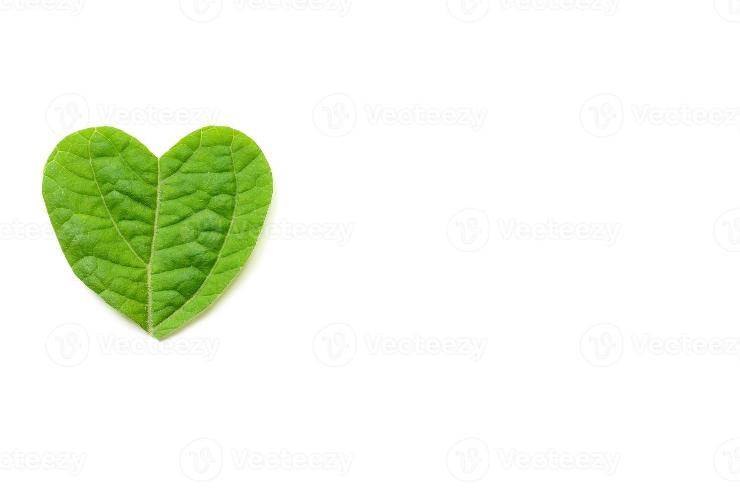 El corazón se corta de follaje sobre fondo blanco. foto