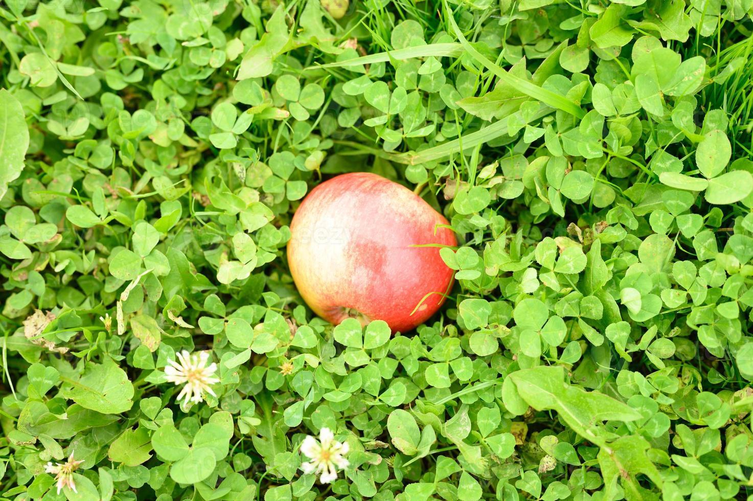 Manzana roja madura brillante sobre la hierba verde foto