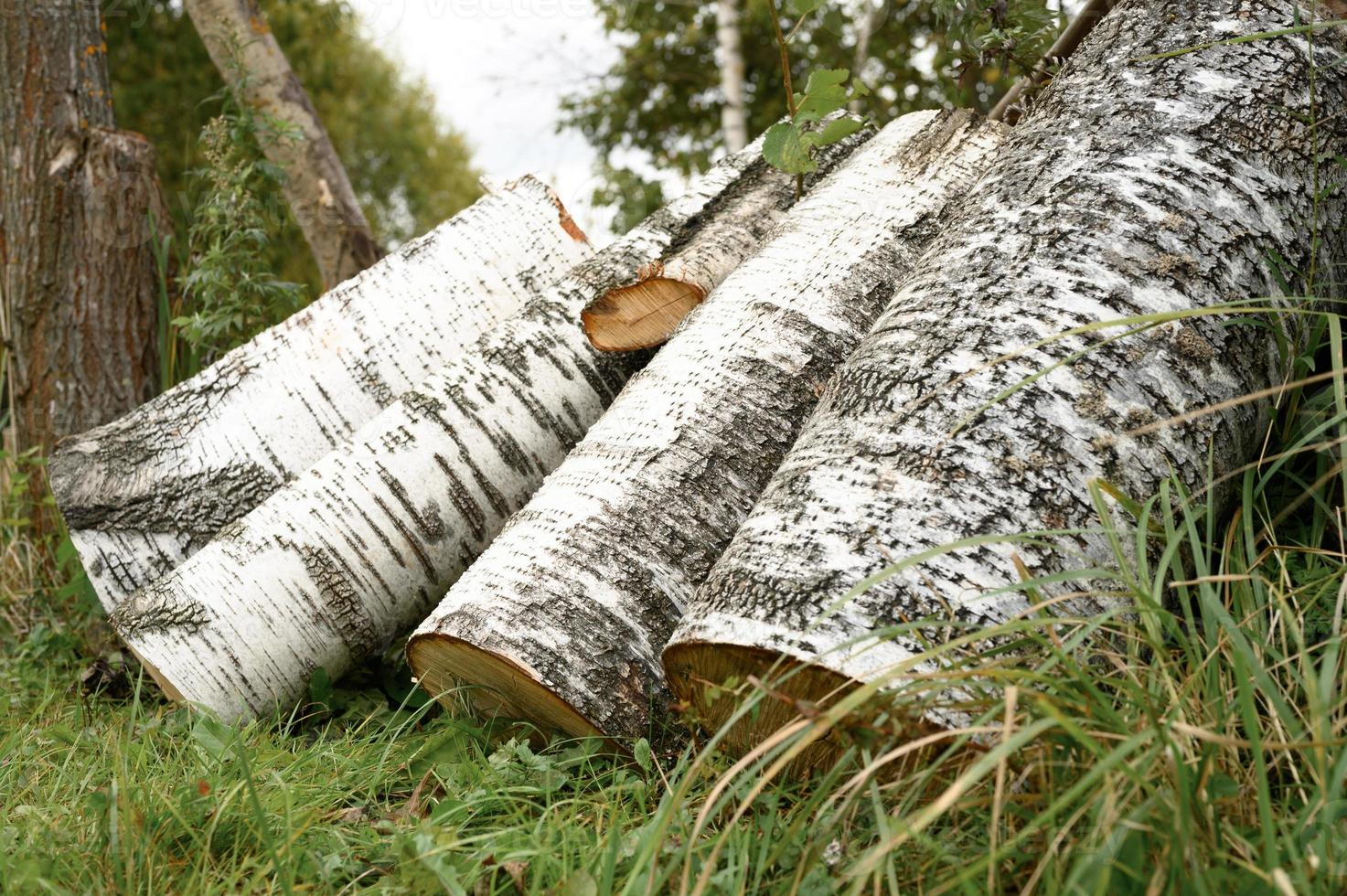 A few birch logs on the grass photo