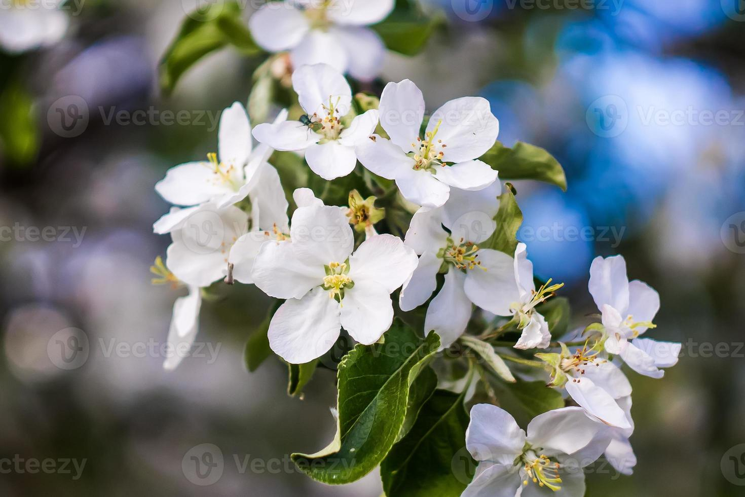 Beautiful flowers in spring photo