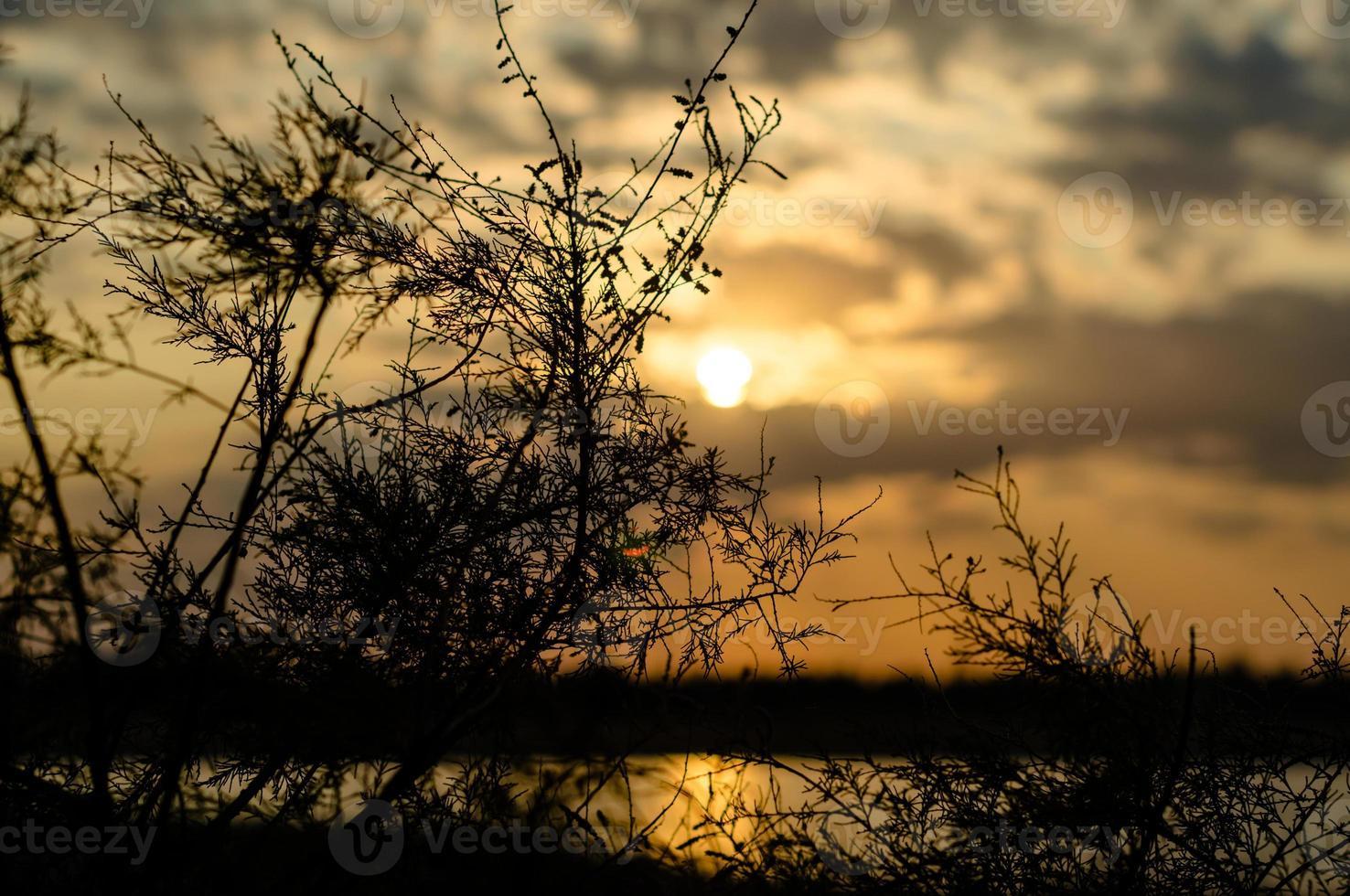 ramas y hojas de plantas contra el sol poniente foto