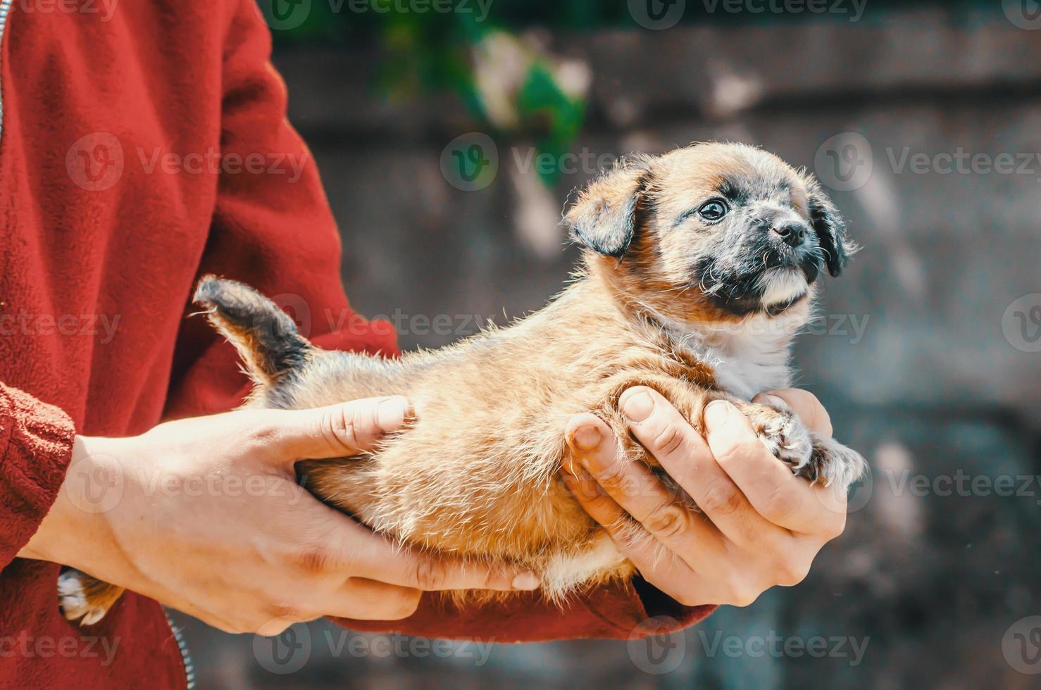 persona sosteniendo un cachorro pequeño foto
