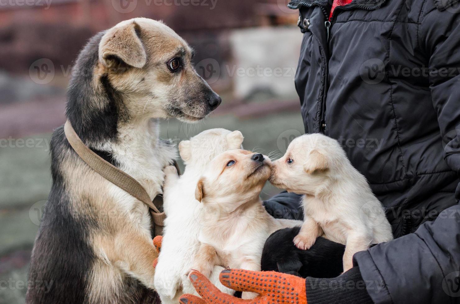 perro adulto y cachorros en manos de un hombre foto