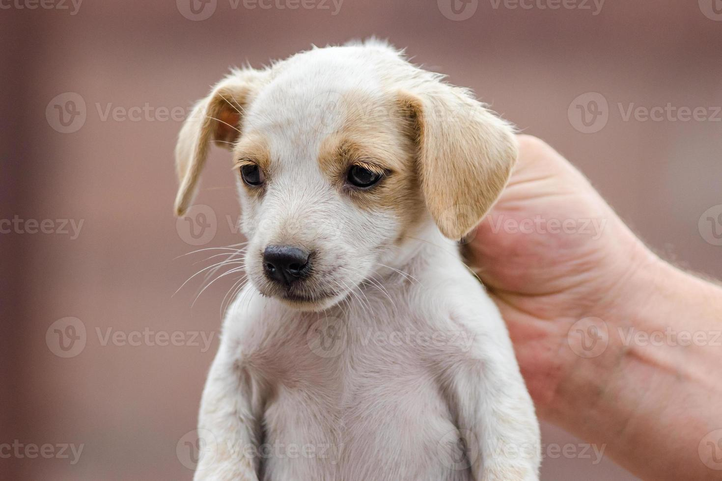 Person holding a puppy photo