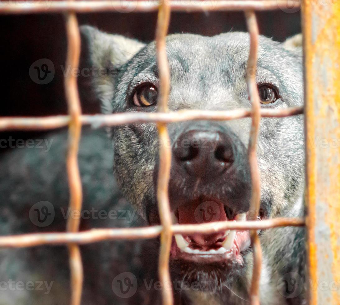perro ladrando detrás de una jaula foto