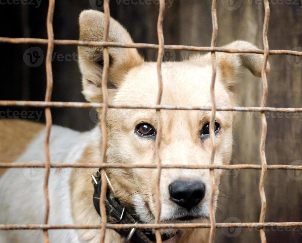 cachorro en una jaula foto