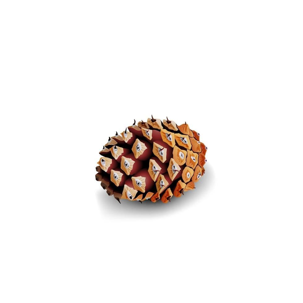 Fir cone isolated on white background for your creativity vector