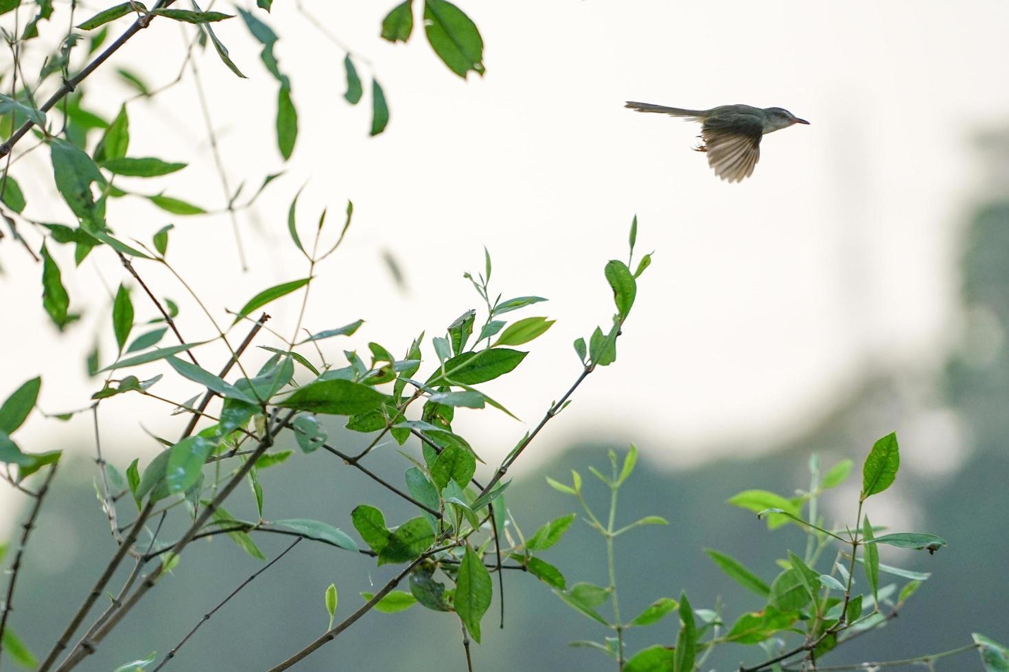 Movimiento borroso pajarito volando desde las ramas del árbol con fondo de cielo despejado foto
