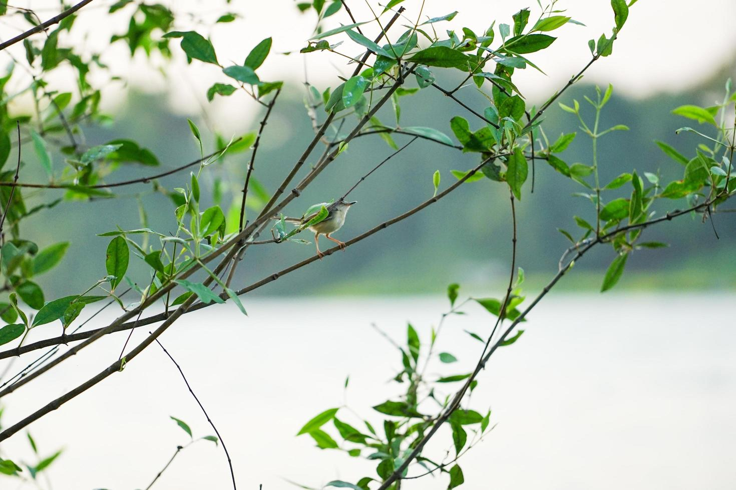 Little bird holding on the branch of tree with clear sky background photo