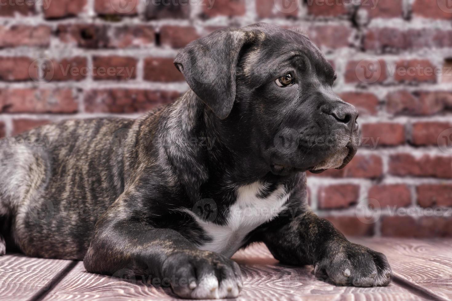 cachorro negro acostado foto