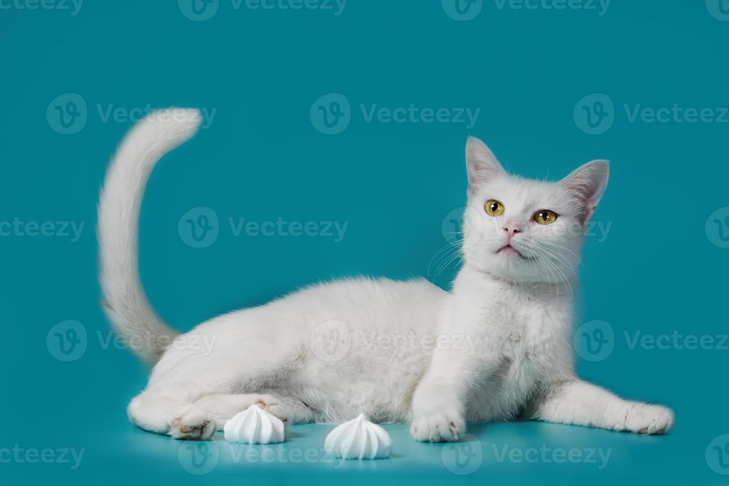 gato blanco junto a merengues foto