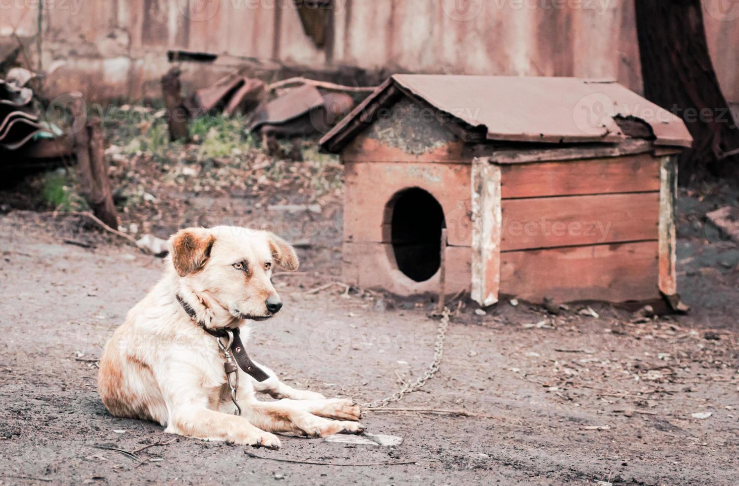perro con una caseta de perro foto