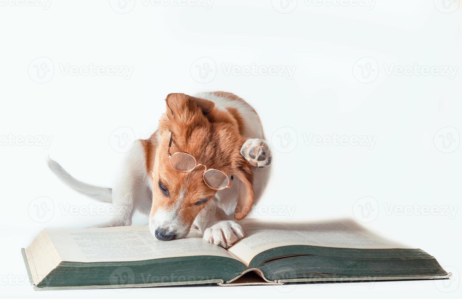 perro con gafas de lectura y un libro. foto
