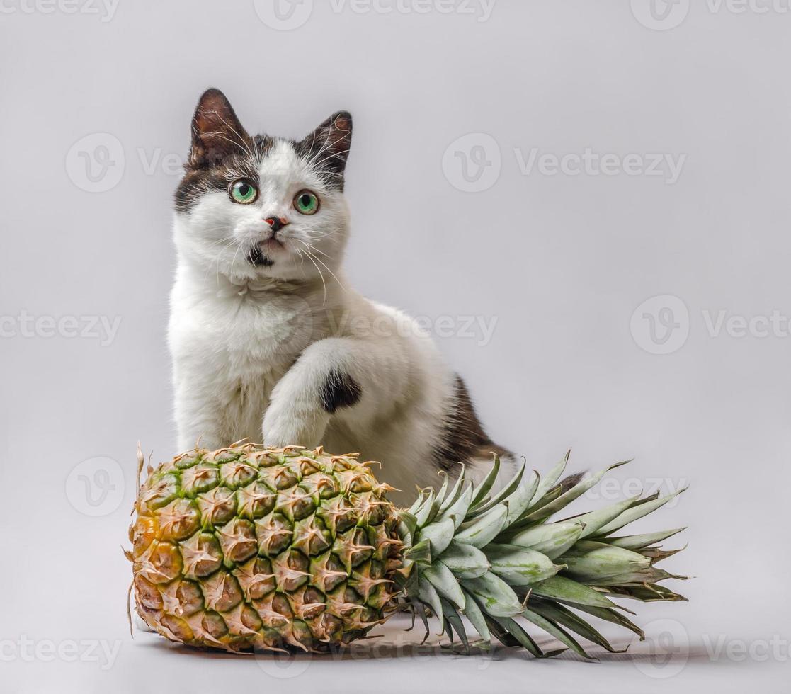 retrato de un gato con una piña foto