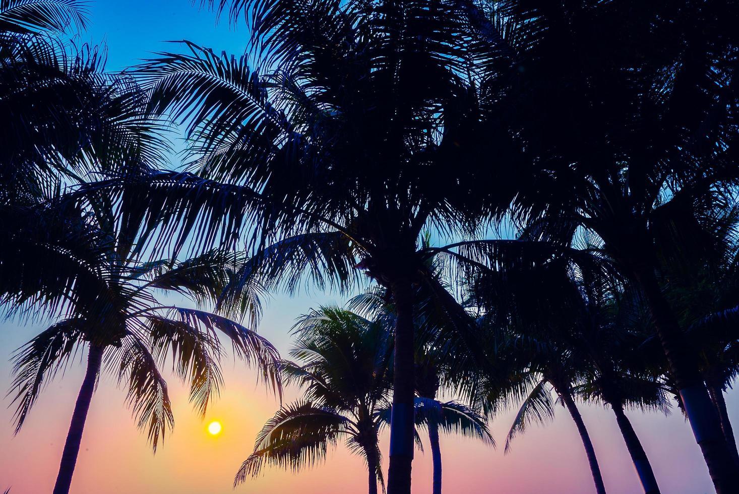 silueta de palmeras foto