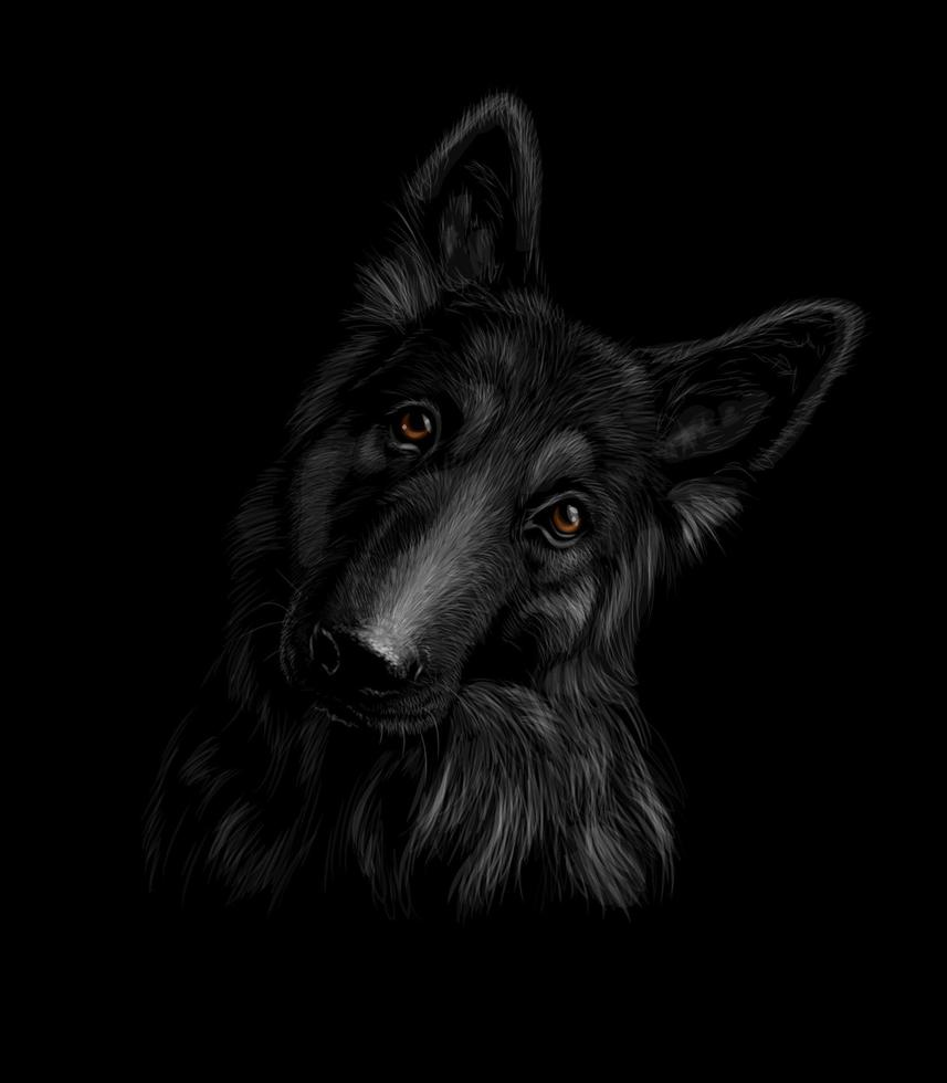 Portrait of a German shepherd dog on a black background. Vector illustration