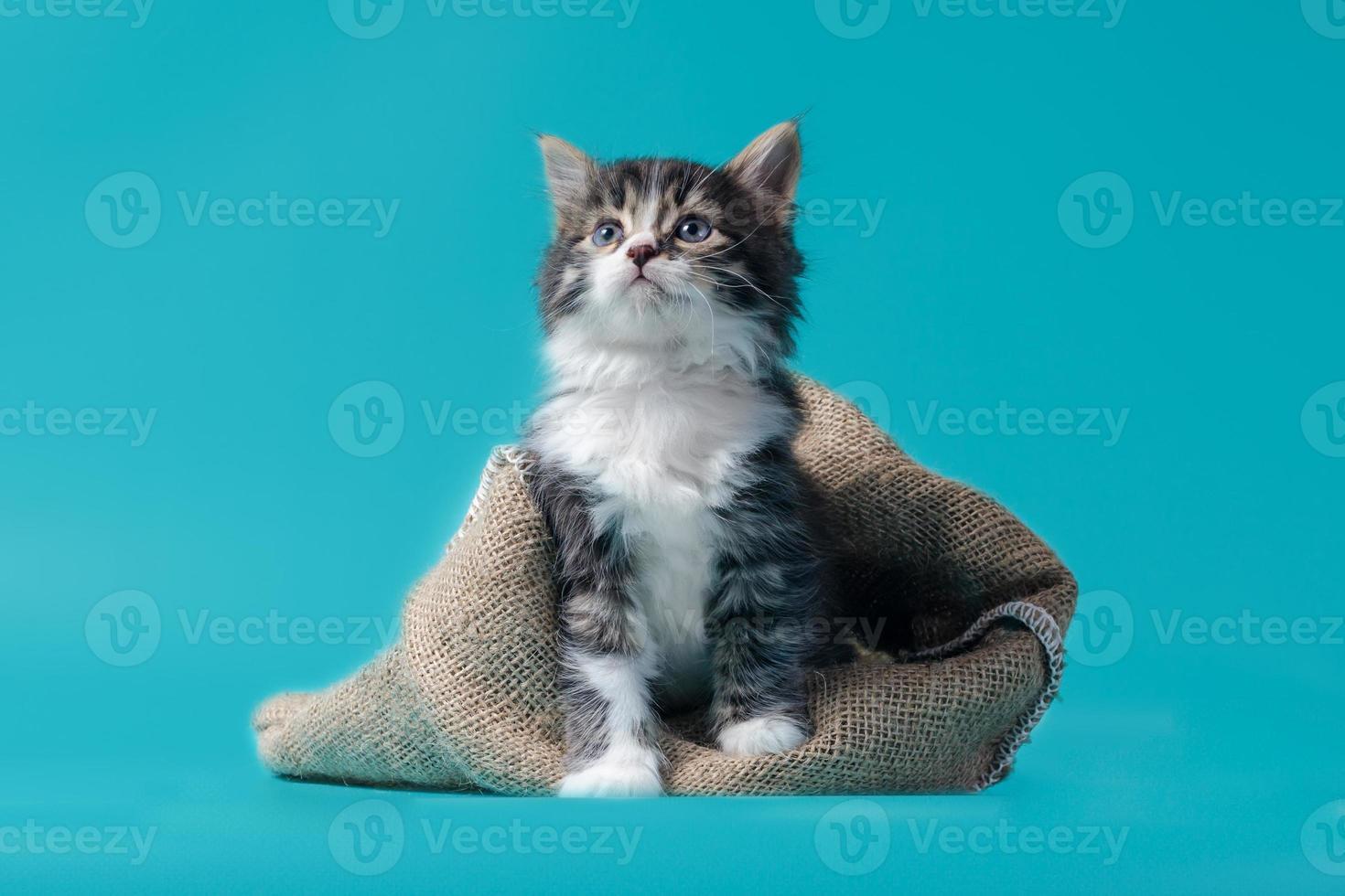 Gatito atigrado con saco sobre un fondo turquesa foto
